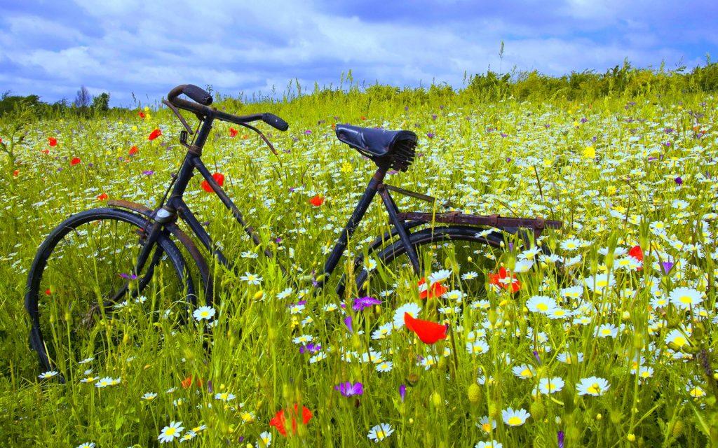 bicycles-online